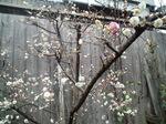 image/2011-03-14T09:22:39-1.jpg