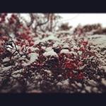image/2012-01-13T22:51:43-1.JPG
