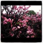 image/2012-03-07T23:00:18-1.JPG