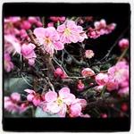 image/2012-03-07T23:10:18-1.JPG