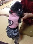 image/2013-03-03T23:26:45-1.JPG