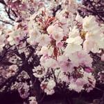 image/2014-04-07T20:23:18-3.JPG