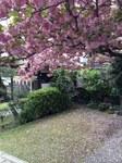 image/2014-04-24T23:15:50-1.JPG