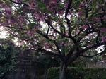 image/2014-04-27T22:05:57-2.JPG